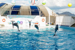 Dolphin show scene Stock Photography