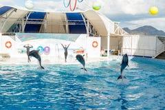 Dolphin show scene Stock Photography