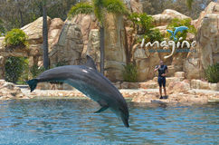 Dolphin show in Sea World Gold Coast Australia Stock Photo