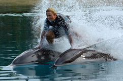 Dolphin show in Sea World Gold Coast Australia Royalty Free Stock Photography
