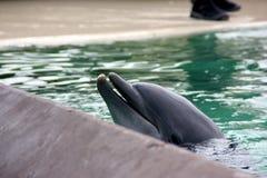 Dolphin show, SeaWorld, San Diego, California Stock Photo