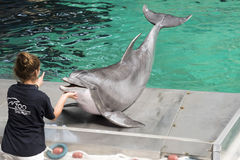 Dolphin Show. Trainer weighing dolphin in Zoo Duisburg, Germany Stock Images