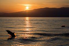 Dolphin silhouette while jumping in the sea at sunset. Happy striped dolphin jumping outside the sea at sunset stock images