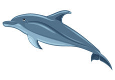 Dolphin. Sketch on white background Royalty Free Stock Images