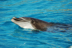 Dolphin smile Royalty Free Stock Image