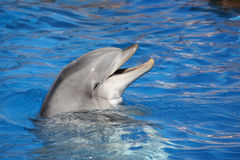Dolphin smiling Stock Photo