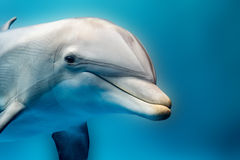 Dolphin smiling eye close up portrait detail Royalty Free Stock Image