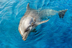 Dolphin smiling eye close up portrait detail Stock Photography