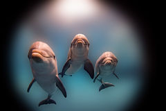 Dolphin smiling eye close up portrait detail Royalty Free Stock Photography