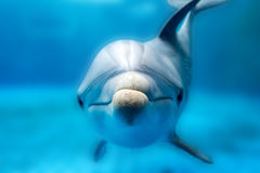 Dolphin smiling eye close up portrait Stock Photos