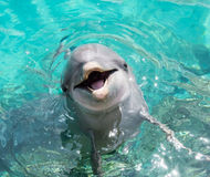 Dolphin smiling in the ocean Stock Photos