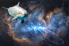 Dolphin in space universe background look at you Stock Photography