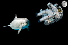 Dolphin in space universe background look at you Royalty Free Stock Photo