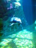 Dolphin in the spotlight stock photo