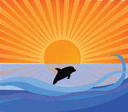 Dolphin and sunset. Dolphins in ocean in sunset Royalty Free Stock Photography