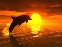 Dolphin in Sunset Royalty Free Stock Photos