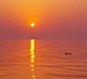 Dolphin and the sunset Royalty Free Stock Photos