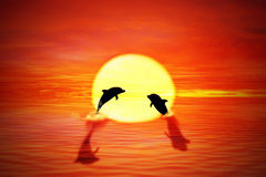 Dolphin sunset. Two playful dolphins jumping from water against a beautiful sea sunset. Travel, vacation, voyage, tropical paradise trip, adventure, tourism Stock Photos