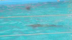 A dolphin swim in the pool stock video footage