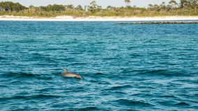 Dolphin swimming by boat royalty free stock photography