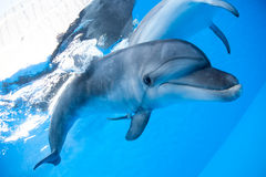 Dolphin swims under the water Royalty Free Stock Photos