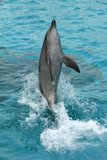 Dolphin Tail Walking royalty free stock images