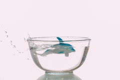 Dolphin toy swim in a transparent bowl Stock Photography