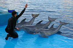 Dolphin Trainer Stock Photo
