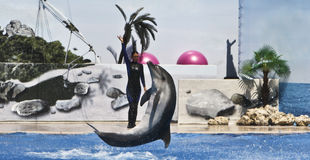 Dolphin and trainer Royalty Free Stock Images