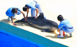 Dolphin & trainers at ocean park hong kong Royalty Free Stock Photography