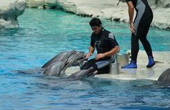 Dolphin trainers Stock Photography