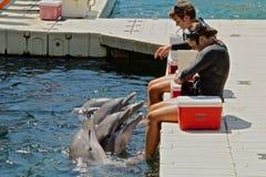 Dolphin training Royalty Free Stock Photography