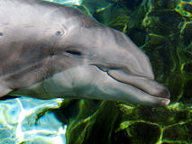 Dolphin Under Water Stock Images