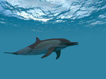 Dolphin under water. Swims in the sea Royalty Free Stock Image