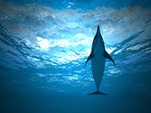 Dolphin under water. Swims in the sea Royalty Free Stock Photo
