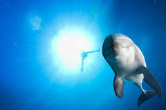 Dolphin underwater on ocean background Stock Images