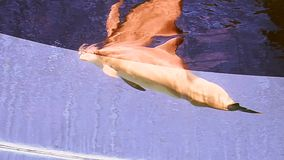 Dolphin stock footage