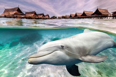 Dolphin underwater on tropical resort Stock Image