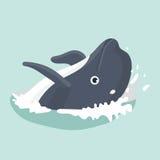 Dolphin . Stock Photos