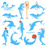 Dolphin vector seafish character drawing or dolphinfish playing undersea illustration sealife set of blue fish in. Dolphinarium isolated on white background royalty free illustration