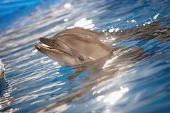 Dolphin in water Stock Photo