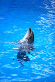 Dolphin In Water Stock Photos