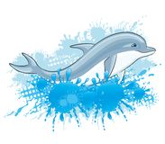 Dolphin and water splash. Dolphin and water splash on a white background Royalty Free Stock Images