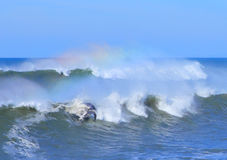 Dolphin waves and rainbow. Dolphin jumping from large ocean waves and rainbow Royalty Free Stock Photos