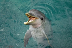Dolphin Where's Lunch stock images