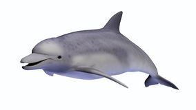Dolphin on White. 3D-rendered dolphin on a white background stock illustration