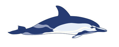Dolphin on a white background. Realistic dolphin  on a white background. Vector illustration Stock Image