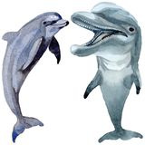 Dolphin wild mammals in a watercolor style isolated. Stock Photos