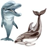 Dolphin wild mammals in a watercolor style isolated. Royalty Free Stock Photo