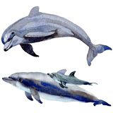 Dolphin wild mammals in a watercolor style isolated. Stock Image